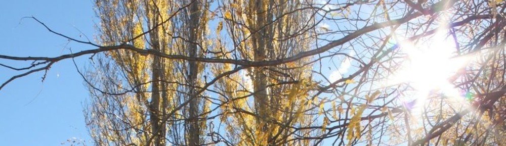 Sunny-Tree-Tops.jpg