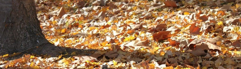 cropped-Autumn-Leaves-forest-floor.jpg