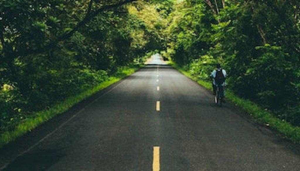Forest road austin-neill-7BF0vuClFYQ-unsplash 900x200pxl